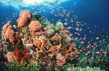 /hotely/fi005/res/4-corals-marine-life.jpg